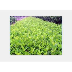 专业的园林绿化、景致花园绿化(在线咨询)、宜春园林绿化图片