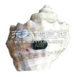 贝类鲍鱼粘贴标签图片