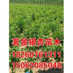 茗景银杏(草莓行情)草莓图片