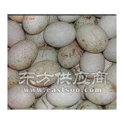 放养鸭皮蛋生产厂家图片
