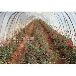 玫瑰花专用led植物生长灯图片