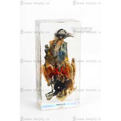 动物标本 包埋标本 鸽解剖标本图片