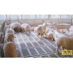 昌邑富凯铸造,【养猪机械代理】,陕西养猪机械图片
