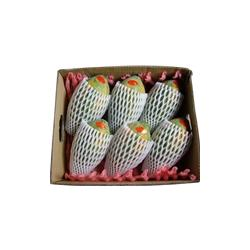 栖霞亮亮塑业(图)、水果网套、网套图片
