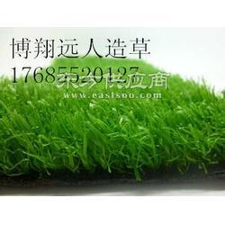 绿化休闲草坪供应高仿真草坪图片