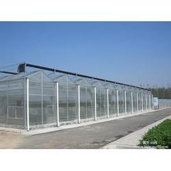 温室大棚-建发温室建设厂-连栋温室大棚图片