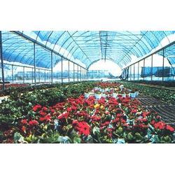 建发温室建设-温室大棚材料-阿勒泰地区 温室大棚图片