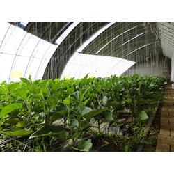 日光温室工程|三明日光温室|建发温室建设公司图片