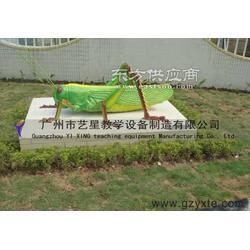 供应生物园模型 蝗虫图片