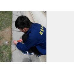 保格利白蚁防治专业(图)、白蚁消除、南昌白蚁图片