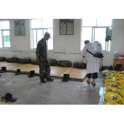 南昌灭鼠公司,余江县灭鼠,保格利控虫(查看)图片
