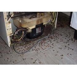 专业灭白蚁的、南昌白蚁、保格利控虫除虫图片