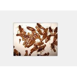 怎样除白蚁-保格利控虫(在线咨询)南昌白蚁图片