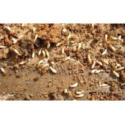 南昌灭蟑螂老鼠、萍乡灭蟑螂、保格利控虫(查看)图片
