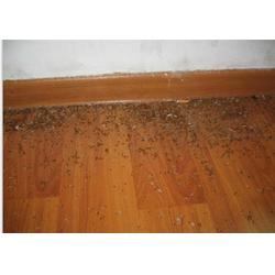 灭老鼠价钱|灭蚊子最有效的方法|吉安灭老鼠图片