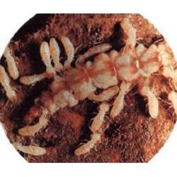 保格利控虫_临川区灭白蚁_南昌消灭白蚁的办法图片