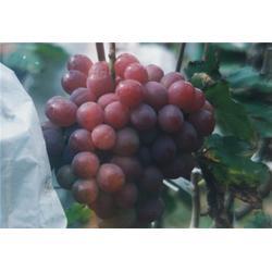 水果塑料袋-华东塑料机械-塑料袋图片