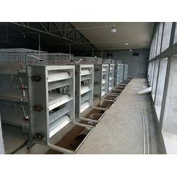 多层鸡笼报价-日照鸡笼厂家-无锡多层鸡笼图片