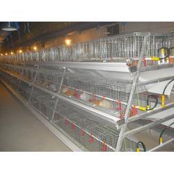 万隆(图)|蛋鸡笼厂家|日照蛋鸡笼图片
