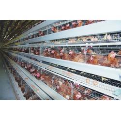 畜牧养殖设备多少钱、万隆(已认证)、畜牧养殖设备图片