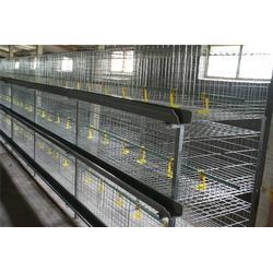 多层鸡笼供应商 五莲鸡笼厂家 枣庄多层鸡笼