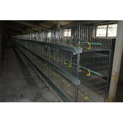 多層雞籠-山東雞籠廠家-多層雞籠報價圖片