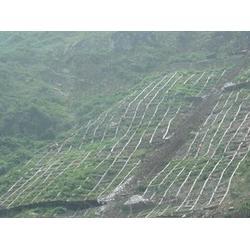 诺佳五金丝网公司(图),钢丝绳网订货计划,安康钢丝绳网图片