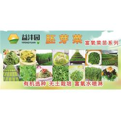 有机蔬菜管理 阜阳有机蔬菜 益沣园图片