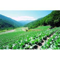 种植有机蔬菜农场_菏泽有机蔬菜_益沣园图片