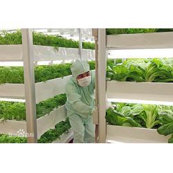 益沣园(图)|健康蔬菜种植|雅安健康蔬菜图片