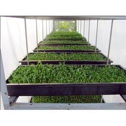 绿色健康蔬菜,健康蔬菜,益沣园(查看)图片