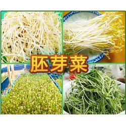 益沣园(图)_健康蔬菜微工厂_甘肃健康蔬菜图片