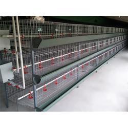 山东肉鸡笼加工厂|吉特佳机械厂|肉鸡笼图片