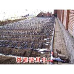 重庆微滴灌、蔬菜大棚微滴灌、广圣农业机械(认证商家)图片