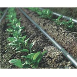 微滴灌设备、广圣农业机械、抚顺微滴灌图片