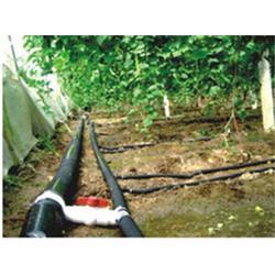 微滴灌系统,浙江微滴灌,广圣农业机械图片