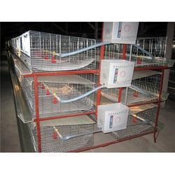 山东肉鸡笼配件、肉鸡笼配件、昌盛畜牧图片
