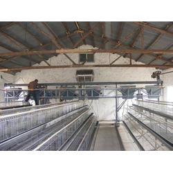 阶梯式肉鸡笼_阶梯式肉鸡笼安装_昌盛畜牧(优质商家)图片