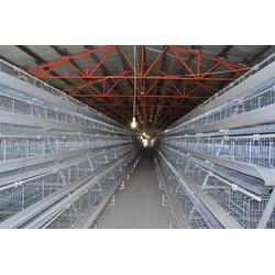 阶梯式鸡笼|阶梯式鸡笼厂家直销|昌盛畜牧(优质商家)图片