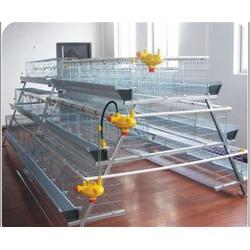 山东肉鸡笼设备、昌盛畜牧(在线咨询)、肉鸡笼设备图片