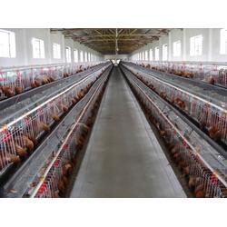 鸡笼、昌盛畜牧、阶梯式鸡笼图片