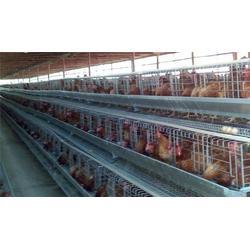 莱芜种鸡笼-昌盛畜牧(在线咨询)鸡笼图片