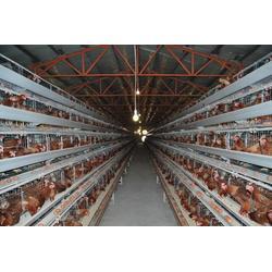 镀锌肉鸡笼直销,肉鸡笼,昌盛畜牧图片