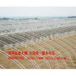 蔬菜温室大棚、郑州六建、温室大棚图片