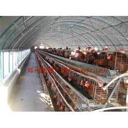 蔬菜大棚安装、岳阳市蔬菜大棚、郑州六建图片