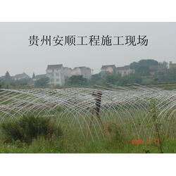 种植蔬菜大棚、郑州六建、保山市蔬菜大棚图片