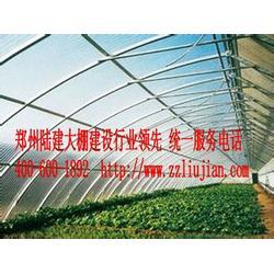 定做温室大棚、益阳市温室大棚、郑州六建图片