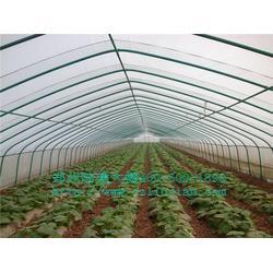 钢管蔬菜大棚_郑州六建_蔬菜大棚图片