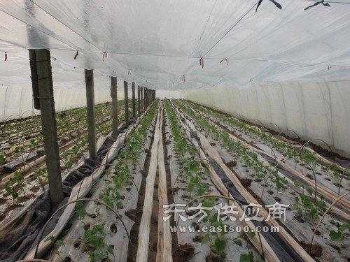 宝创农膜 新型农用大棚膜-农用大棚膜图片