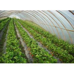 新型农用大棚膜|宝创农膜|玉田县大棚膜图片